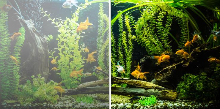 Photo of How to Deal With Cloudy Aquarium Water?