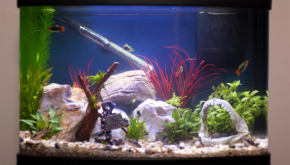 How to Heat Up Fish Tank Water Quickly