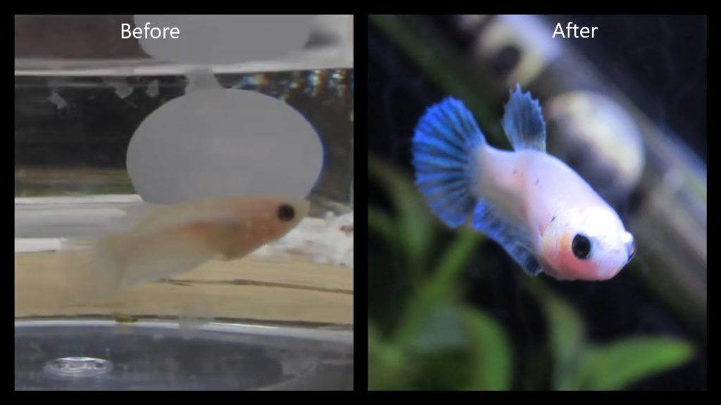 How to Make Baby Fish Grow Faster