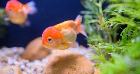 Photo of How to Make Your Pet Fish Like You?