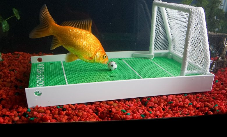How to Train Your Fish to Play Soccer