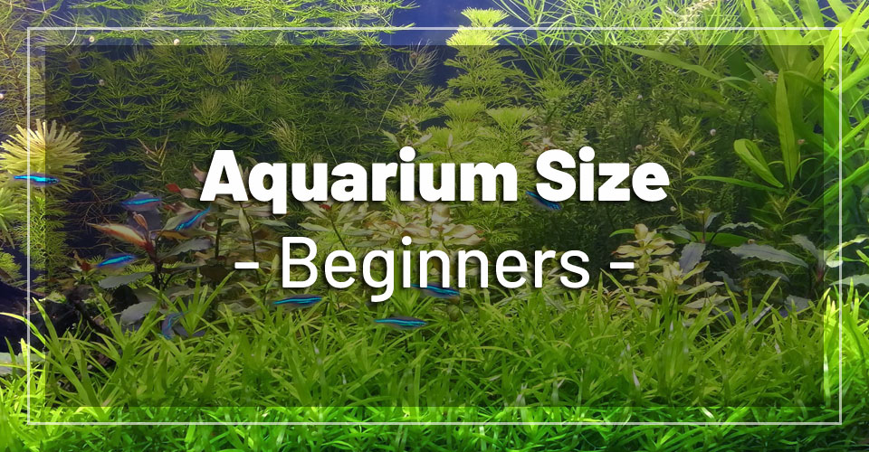 Photo of What Size Fish Tank Is Best For Beginners?