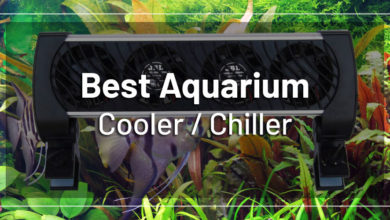 Photo of Best Chiller for Planted Aquarium 2020