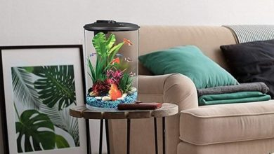 Photo of Best Fish Tanks for Small Spaces 2020