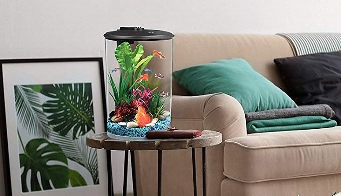 Best Fish Tanks for Small Spaces