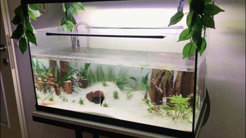 How to Cool Down an Aquarium Without a Chiller