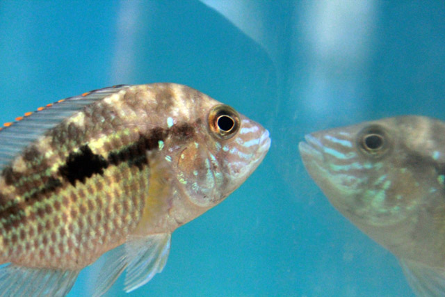How to Get Rid of Reflection in Fish Tank