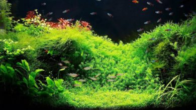How to Keep Fish Tank Plants Alive