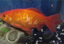 Photo of How to Treat a Sick Fish in An Aquarium?