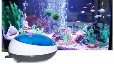 Photo of Best Aquarium Air Pump for Multiple Tanks 2020
