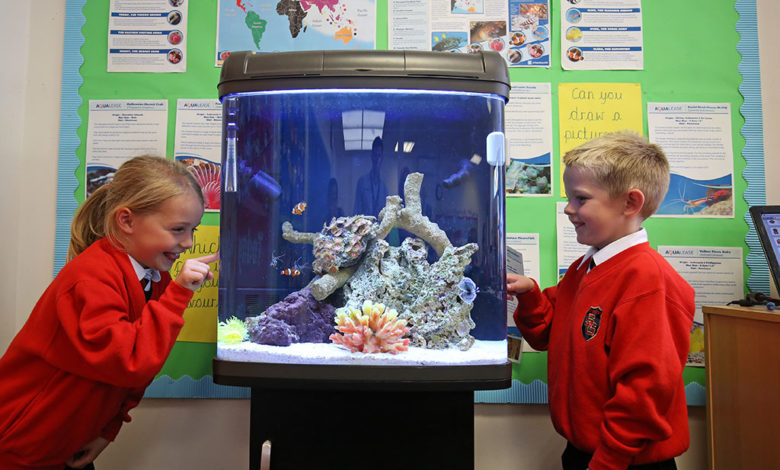 Best Freshwater Fish for Classroom 2021
