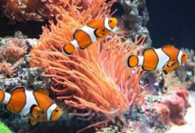 Photo of Best Nemo Fish to Buy in 2020