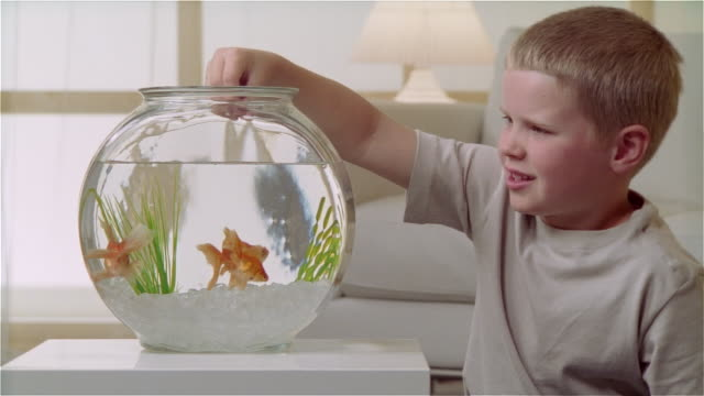 Best Pet Fish for 2-Year-Old
