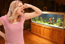 Photo of How to Get Rid of Fishy Smell from Aquarium?