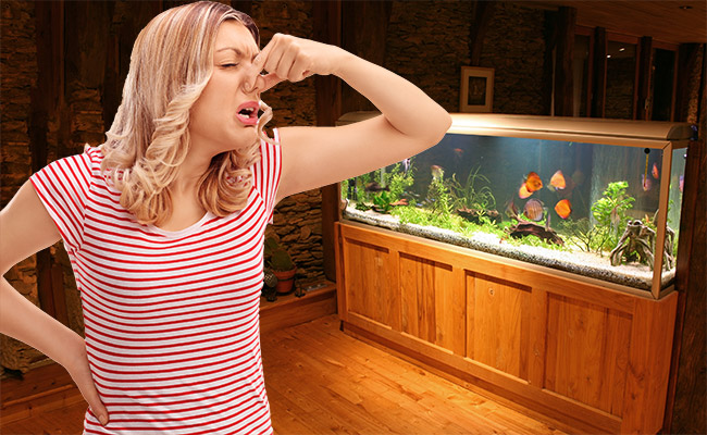 How to Get Rid of Fishy Smell from Aquarium