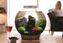 Photo of Best Round Fish Tanks for Beginners 2020