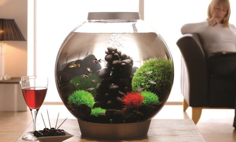 Best Round Fish Tanks for Beginners