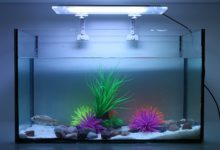 Photo of How Long Should Fish Tank Light Stay On?
