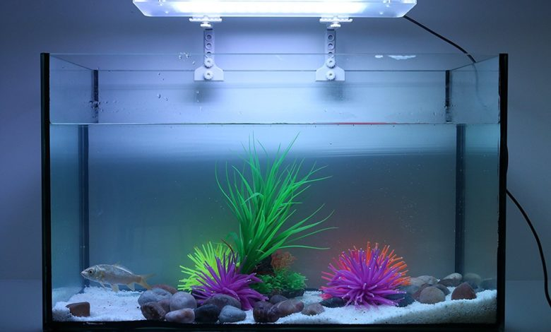 How Long Should Fish Tank Light Stay On