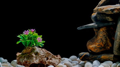How to Decorate a Fish Tank with Rocks