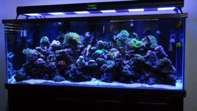 Best Fluorescent Light for Freshwater Aquarium