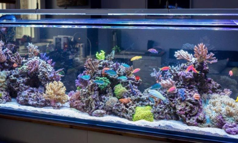 How to Upgrade to a Bigger Fish Tank
