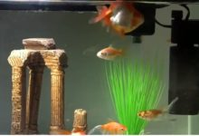 Photo of How to Use a UV Sterilizer in a Fish Tank?