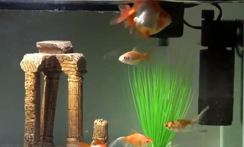 How to Use a UV Sterilizer in a Fish Tank