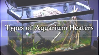 What are the Different Types of Aquarium Heaters