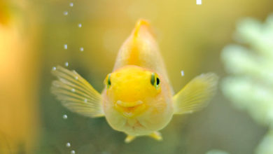 Photo of Do fish have Emotional Feelings?