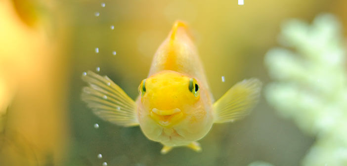 Do fish have Emotional Feelings