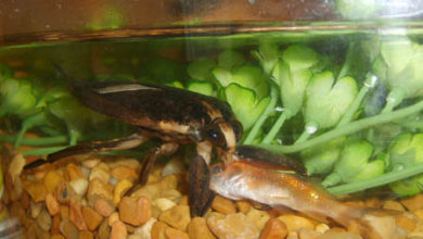 How to Get Rid of Bugs in Fish Tank