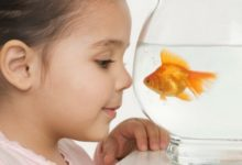 Photo of Can Fish Show Affection to Humans?