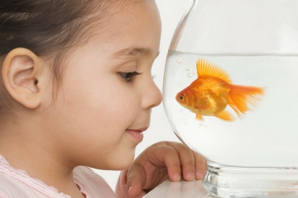 Can Fish Show Affection to Humans