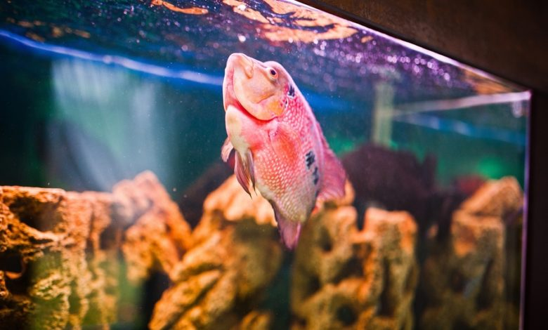 How To Calm Down A Stressed Fish