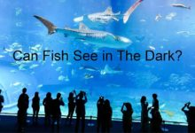 Photo of How Well Do Fish See In The Dark?