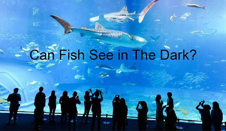 How Well Do Fish See In The Dark