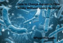 Photo of How to Change Aquarium Filter Media Without Losing Bacteria?