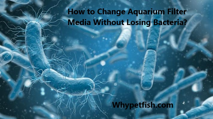 How to Change Aquarium Filter Media Without Losing Bacteria