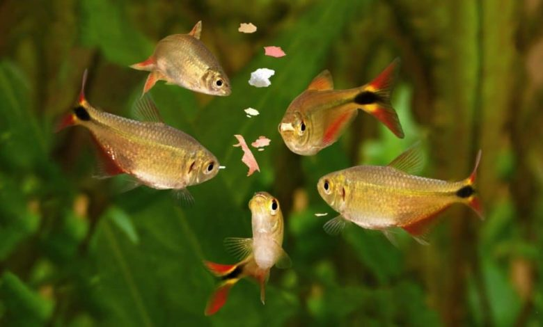 Why Do Fish Spit Their Food Out When Eating