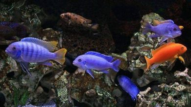 Can African Cichlids have Seizures?