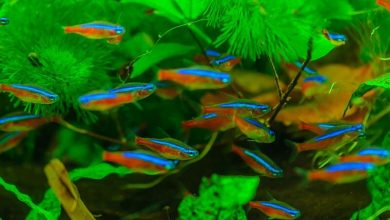 Can a Tropical Fish Live in Cold Water?