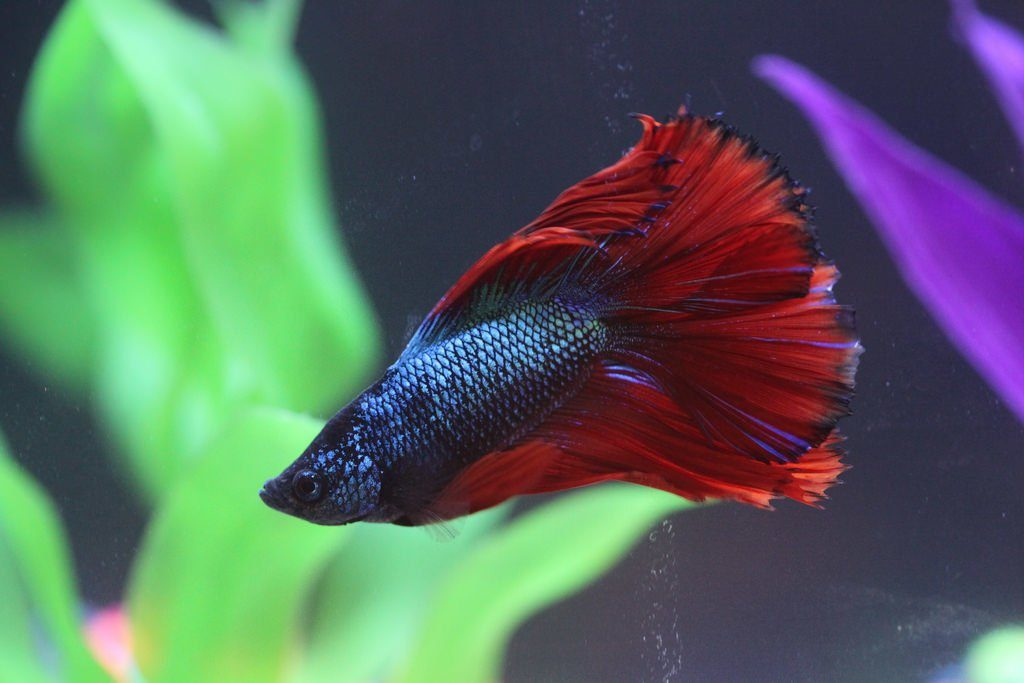 How to Save a Fish from Fin Rot