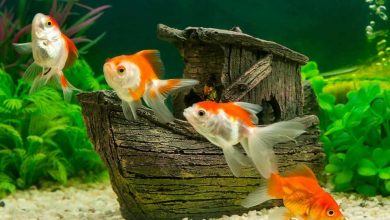 Most Popular Names for Pet Fish