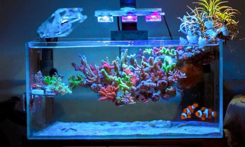 Are Acrylic Aquariums Better Than Glass?