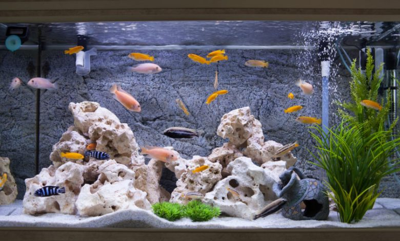 Can I Put Two Filters in My Fish Tank?
