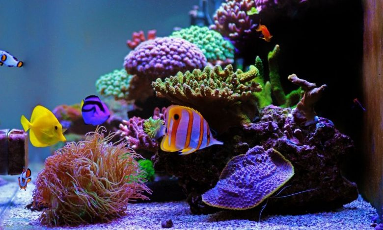 Can a Saltwater Tank be Used for Freshwater?