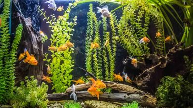 How Do You Make Wood Safe for an Aquarium?