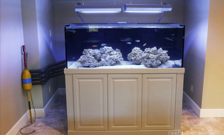 How to Hide a Fish Tank From Landlord?