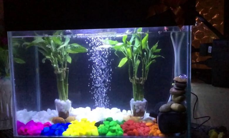 How to Plant Lucky Bamboo in Fish Tank?